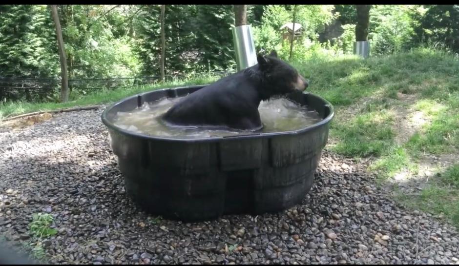 El zoológico dispuso estas acciones para aplacar el calor que afecta a los animales. (Captura Facebook)