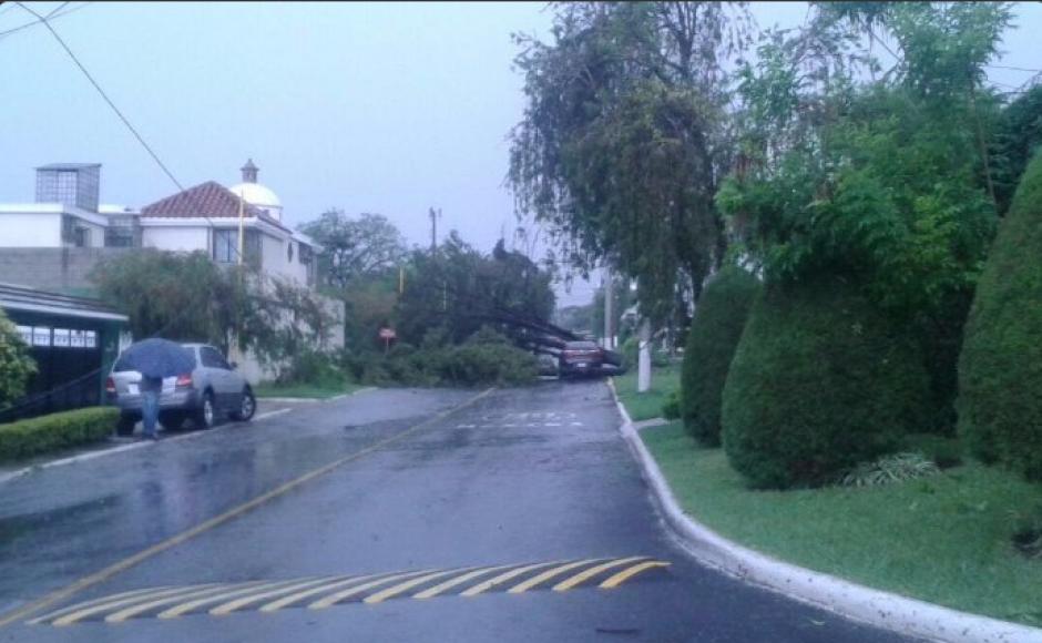 Un árbol cayó en un sector de Mixco. (Foto: Pablo Morales/Emixtra)