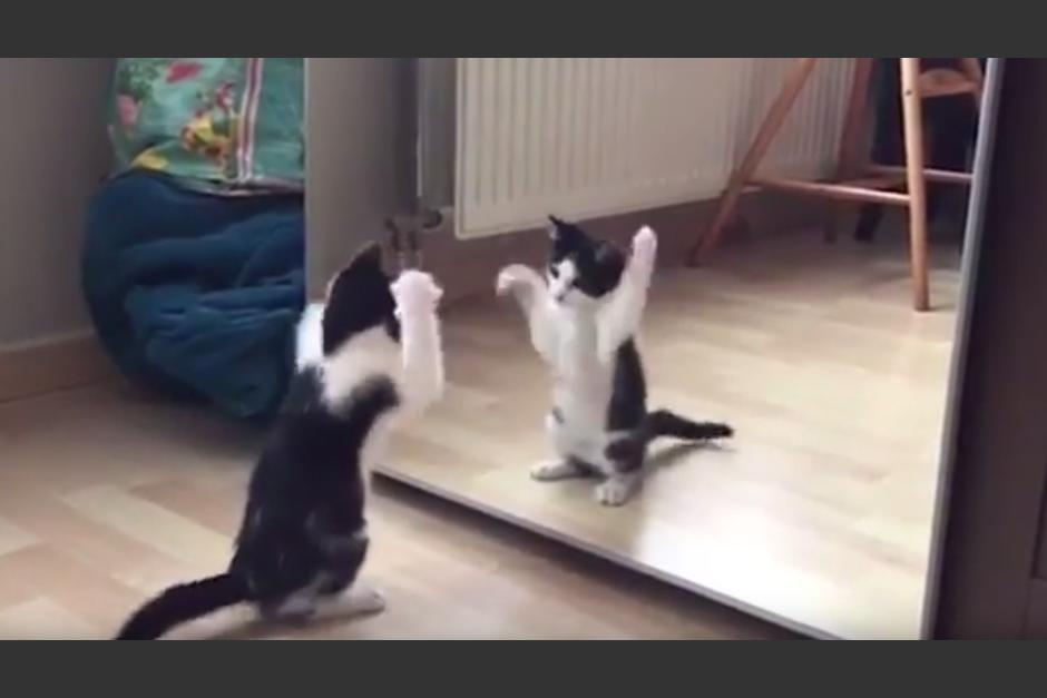 La reacción del gato se volvió viral en YouTube. (Foto: Captura de YouTube)