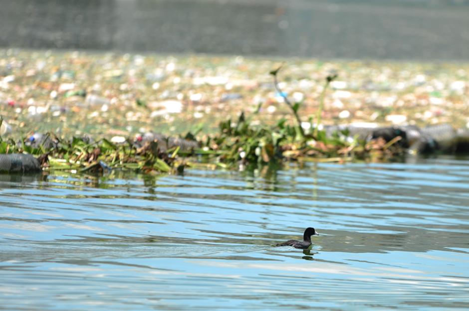 Hay vida silvestre a pesar de la contaminación. (Foto: Jesús Alfonso/Soy502)