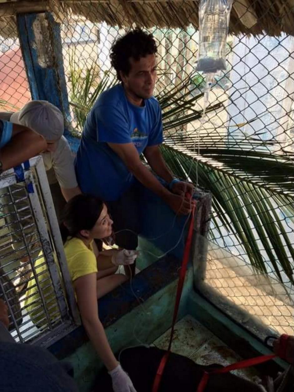 La directora de Arcas con la asistencia del guarda del Conap le administran suero al animal. (Foto: Arcas)