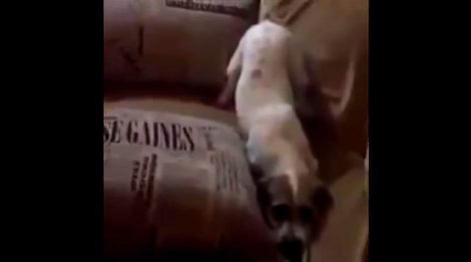 En la secuencia se observa como se asusta por las escenas. (Foto: Captura YouTube)