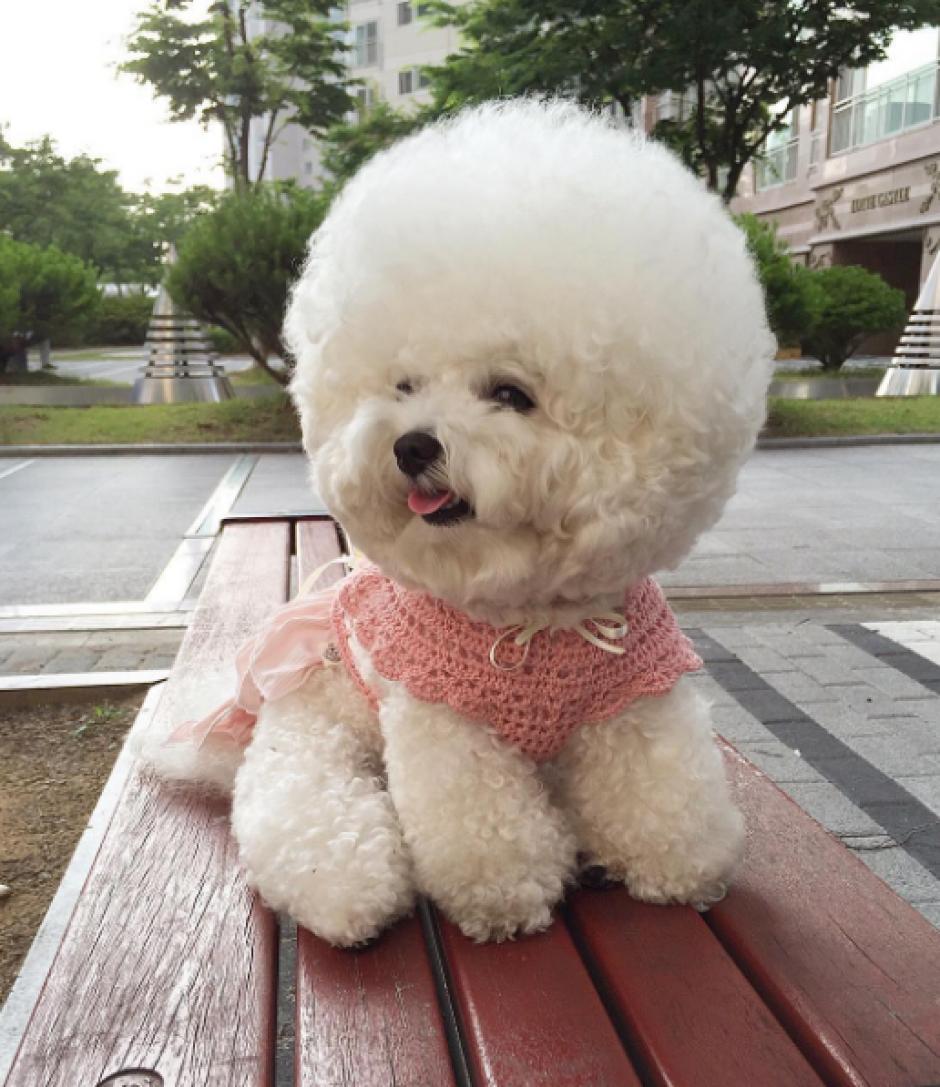 La perrita cuenta con casi 900 publicaciones en Instagram. (Foto: Instagram)