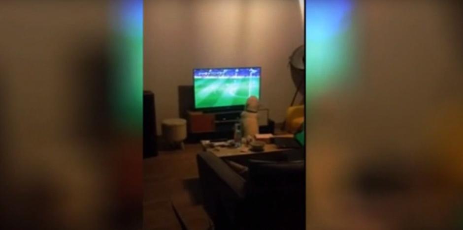 El perro mira atento un partido de fútbol del campeonato. (Foto: Captura de YouTube)