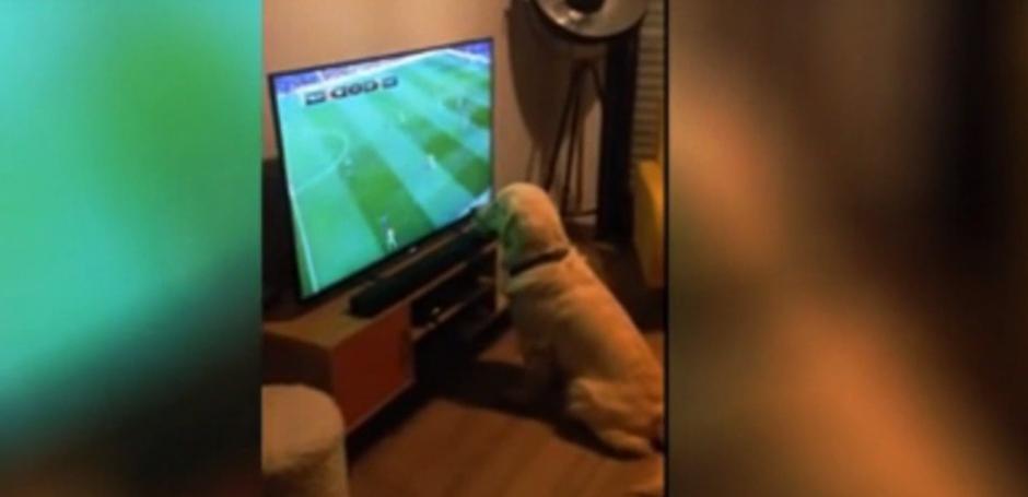 Mientras su dueño lo graba y se ríe, el animal no se mueve. (Foto: Captura de YouTube)