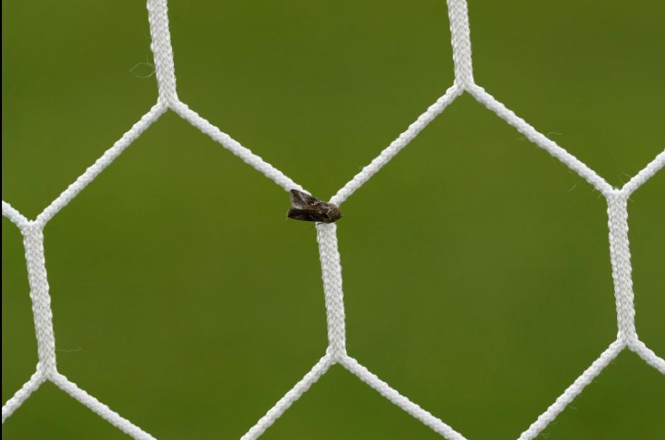 Las porterías fueron uno de los objetivos preferidos de los insectos.  (Foto: EFE)
