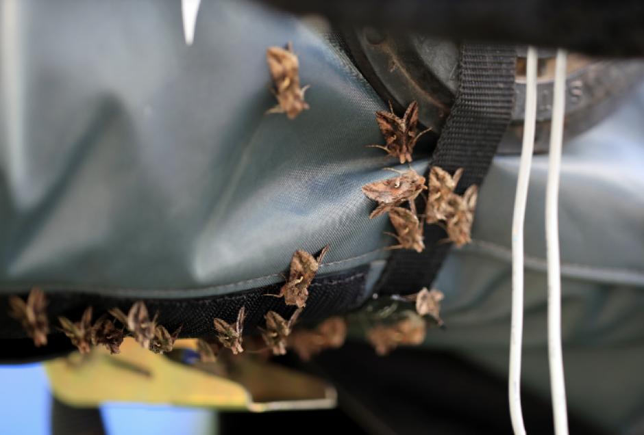 Los bichos estaban en todos lados, desde las porterías hasta las gradas.  (Foto: EFE)