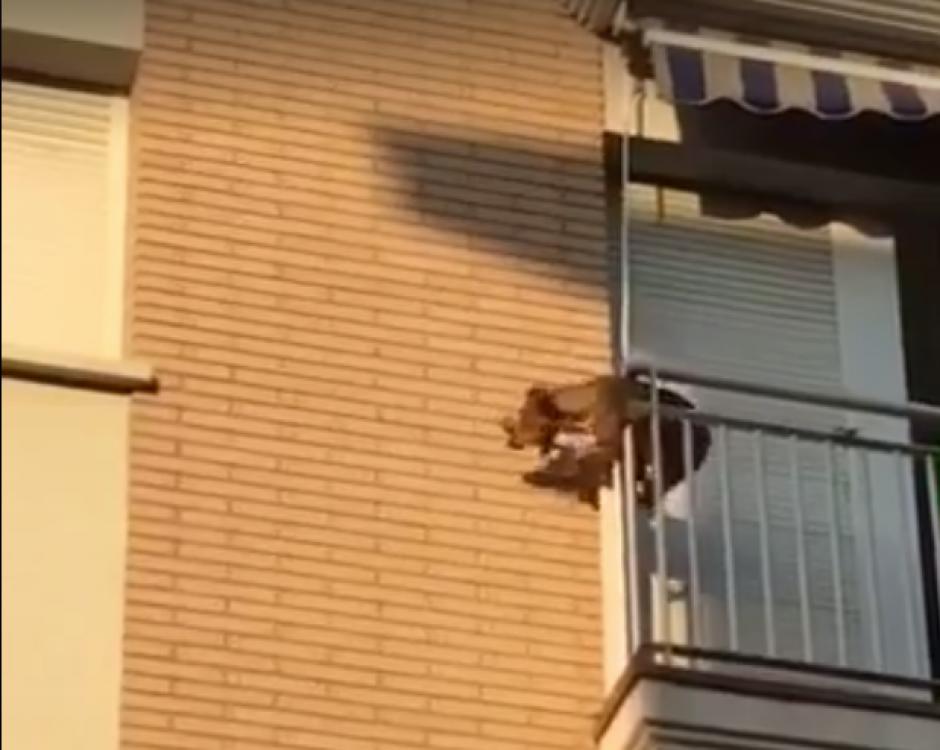 El perro estaba en el balcón sin agua. (Captura de pantalla: Facebook/ Policia Local Polinya)