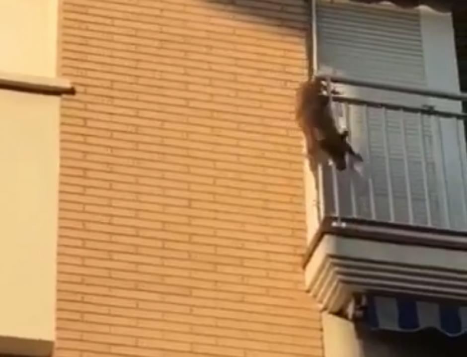 El canino se quedó atrapado entre las rejas del balcón. (Captura de pantalla: Facebook/ Policia Local Polinya)