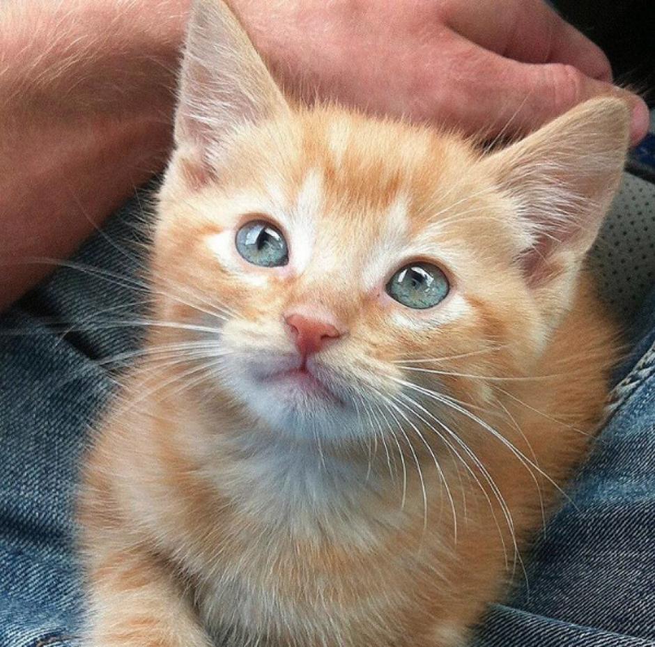 Su gato Jacob también ha ganado popularidad al contar con su propio perfil. (Foto: Instagram/travbeachboy)