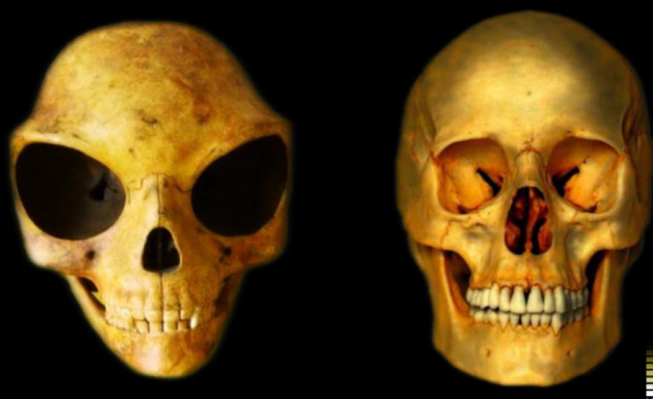 El cráneo es más grande que el de un humano y las cavidades de los ojos también tienen una proporción distinta. (Imagen: Captura de pantalla)
