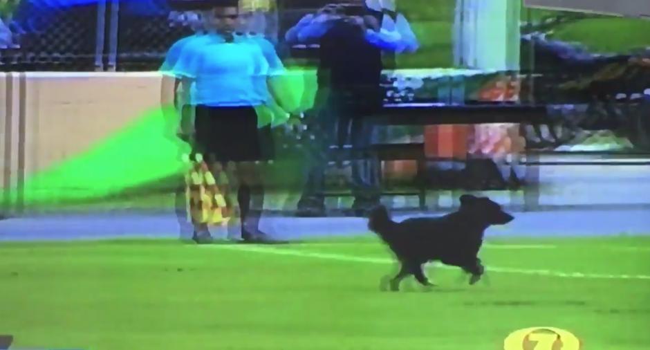 El perro invadió la cancha en dos ocasiones, generando la risa entre las pocas personas que presenciaron el juego. (Captura Pantalla)