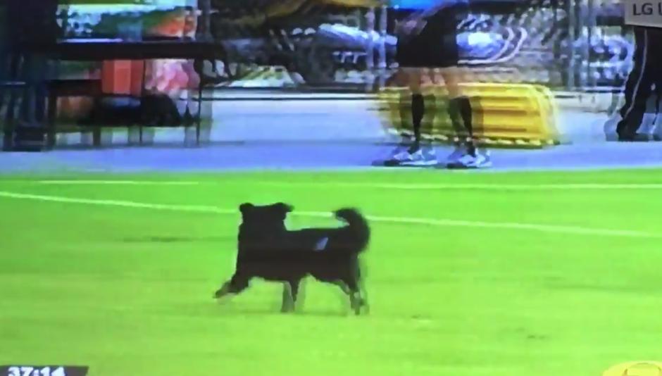 La televisión nacional mostró cómo el perro corrió por el campo y obligó al árbitro a detener el juego. (Captura Pantalla)