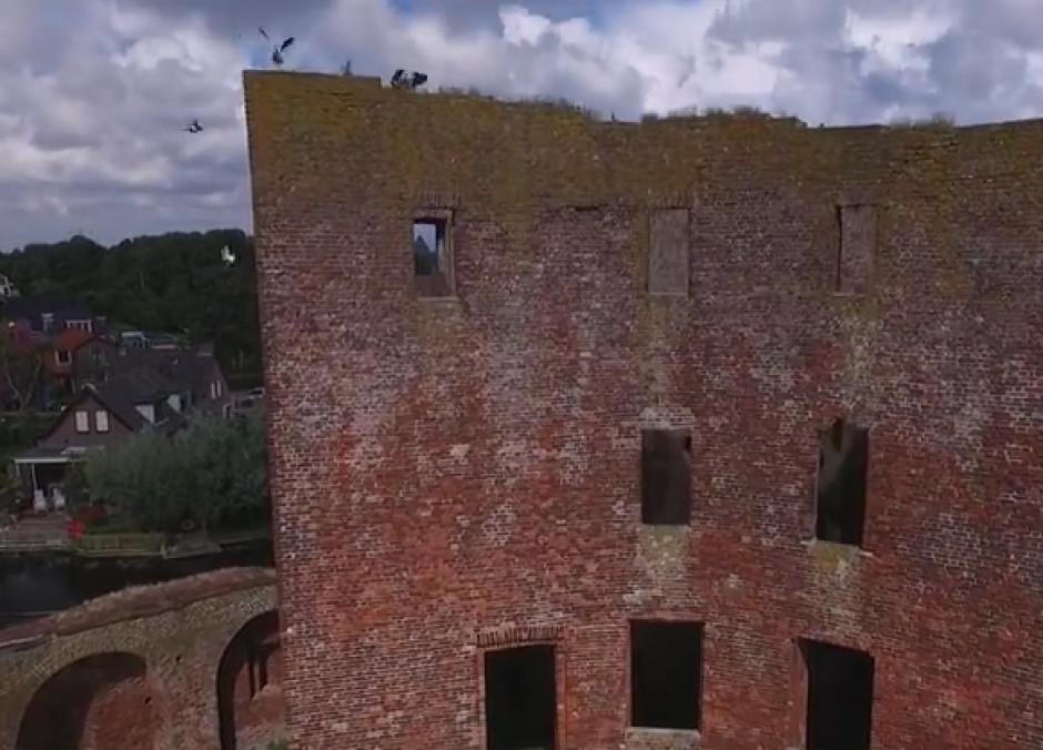 Una bandada de patos se encontraba en el antiguo edificio. (Imagen: Captura de pantalla)