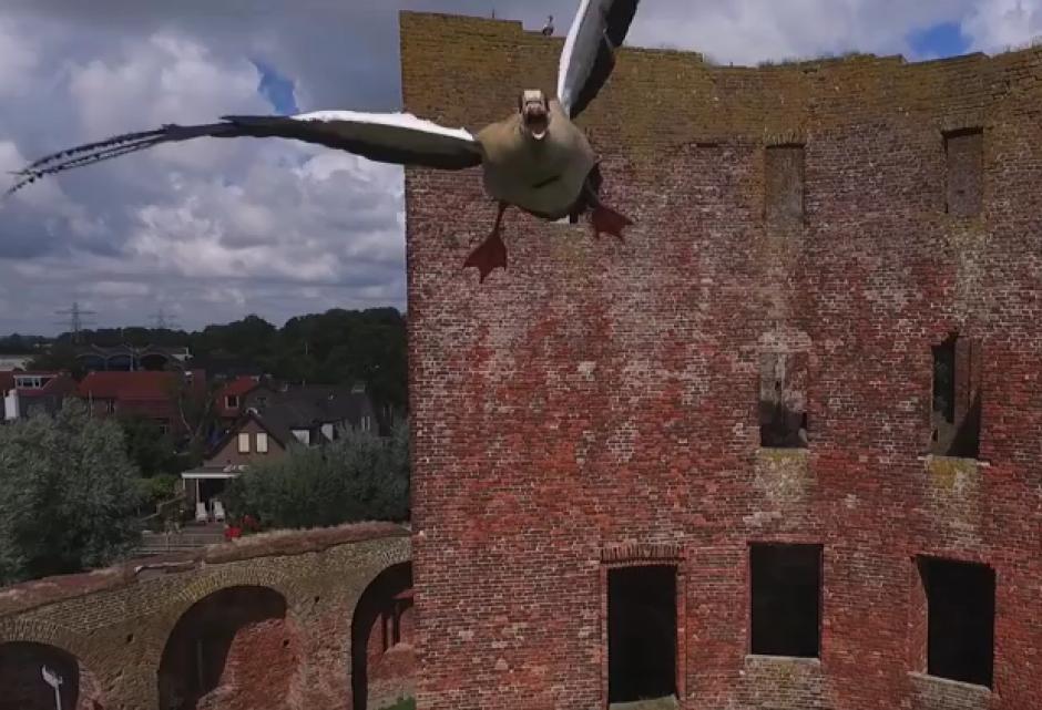 Un ganso atacó a un drone que sobrevolaba un castillo en Holanda. (Imagen: Captura de pantalla)