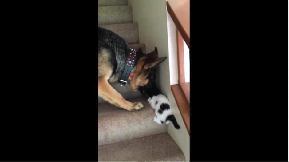 Tennyson trata de tomar a Moo, pero el pequeñín parece estar asustado. (Captura Youtube)