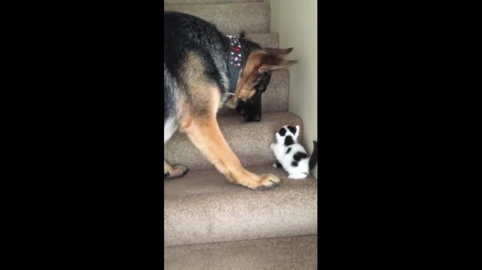 El perro observa a su pequeño amigo y analiza la forma para ayudarlo. (Captura Youtube)