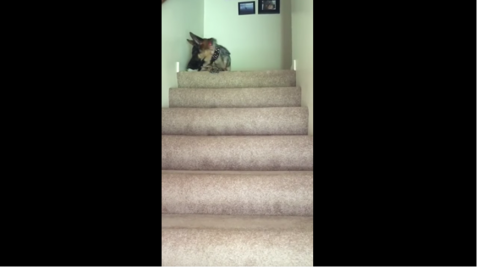 Al final, las dos mascotas observan a su amo desde la parte más alta de las escaleras. (Captura Youtube)
