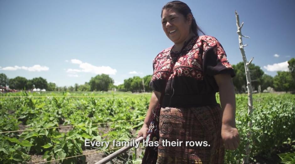 Cerca de 11 familias guatemaltecas tienen una pequeña finca donde cosechan su propia comida. (Captura Vimeo)