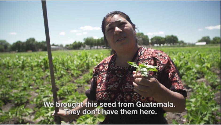 Los frijoles y otras semillas han sido llevadas para ser plantadas en tierras lejanas. (Captura Vimeo)