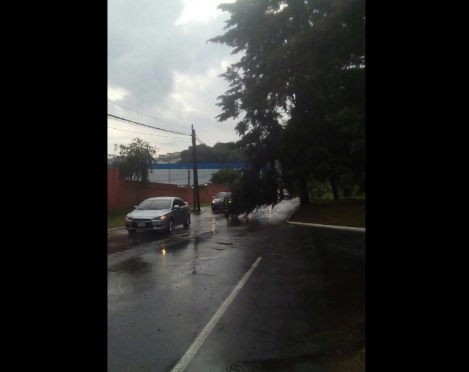 Varios árboles se reportaron caídos en la ciudad. (Foto: PNC/Tránsito)