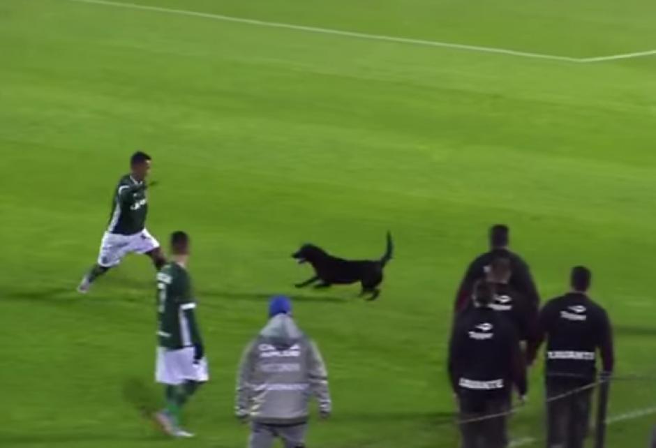 El perro siguió al jugador por toda la cancha sin que lo detuvieran. (Imagen: Captura de pantalla)