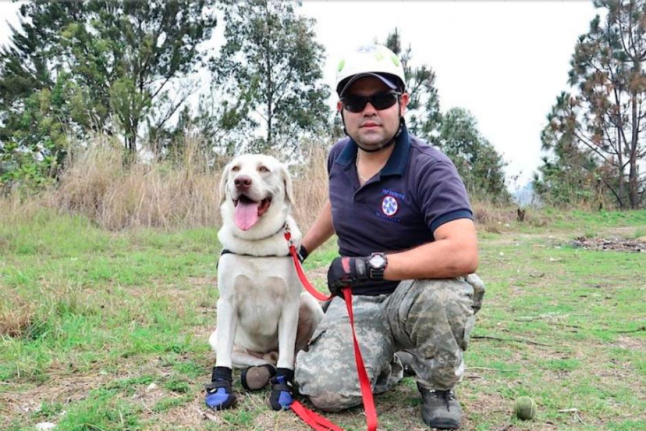 El Labrador Retriever fue adoptado por la familia Piedrasanta de Pet Rescue Guatemala. (Foto: Selene Mejía/Soy502)