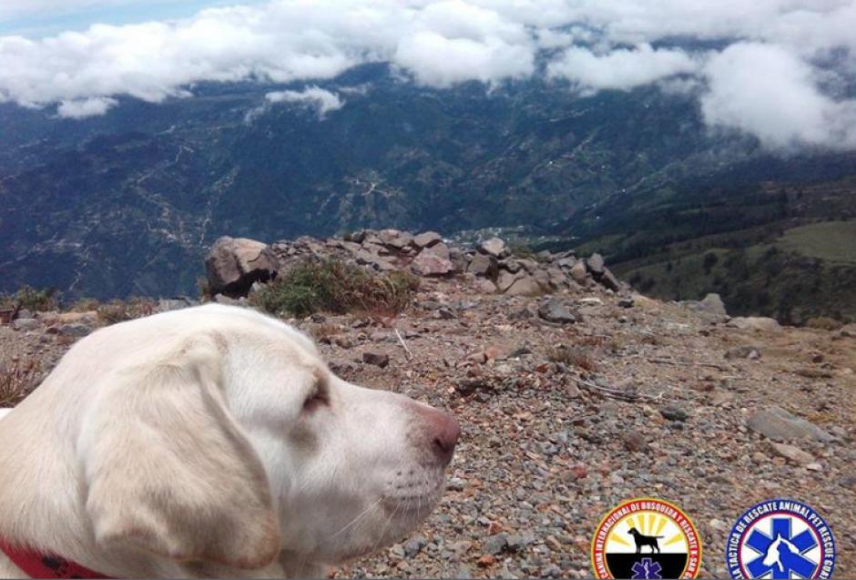 Tras ser entrenado, en julio de este año hizo su primer labor de rescate en el volcán Tajumulco. (Foto: K-SAR Guatemala)