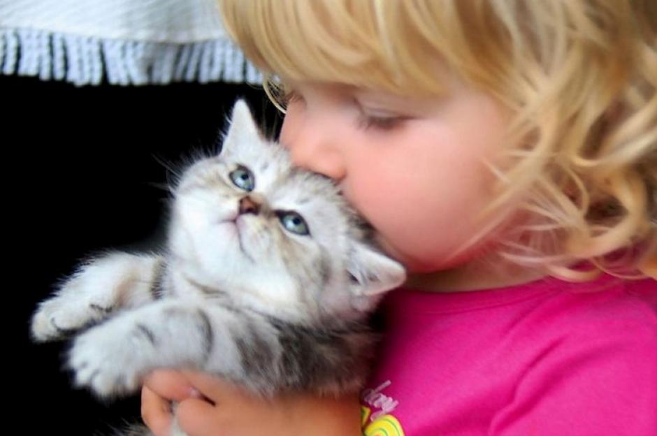 Besar a tus gatos y dejar que te aruñen podría traer grandes problemas para tu salud.