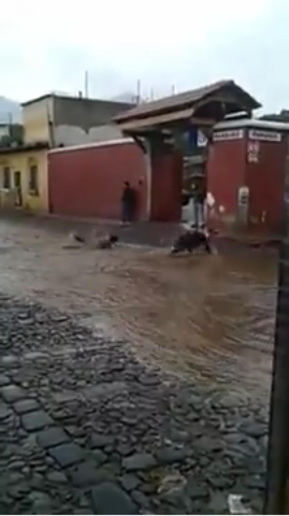 Uno de los individuos parece disfrutar del refrescante chapuzón bajo la lluvia. (Foto: Captura Youtube)
