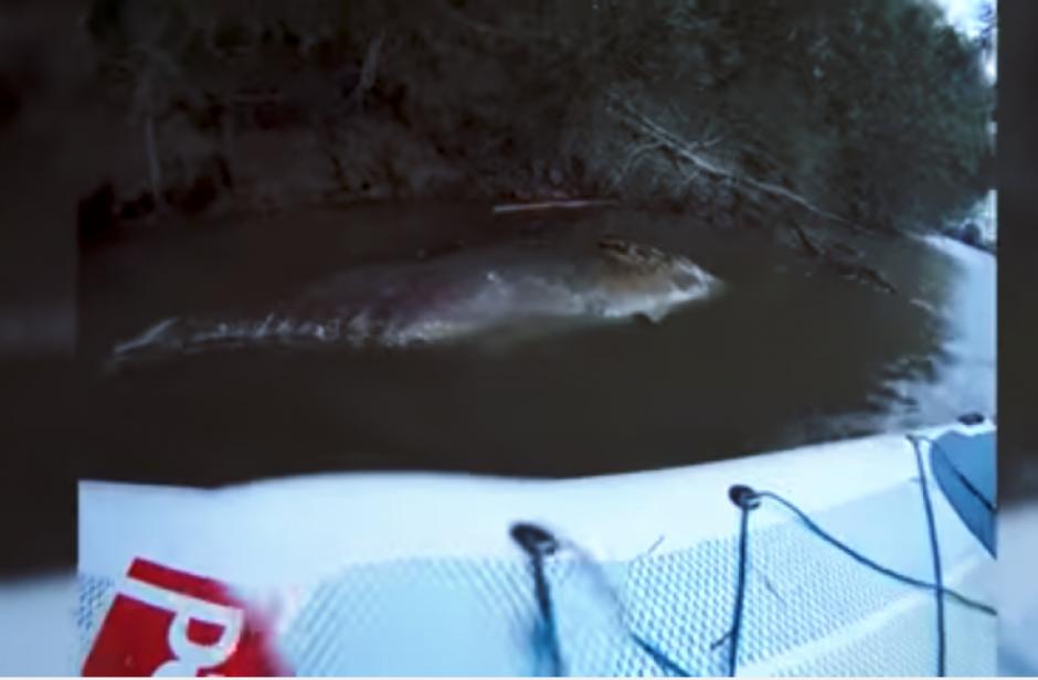 Al notar algo en el agua, los muchachos se fueron acercando lentamente. (Captura Youtube)