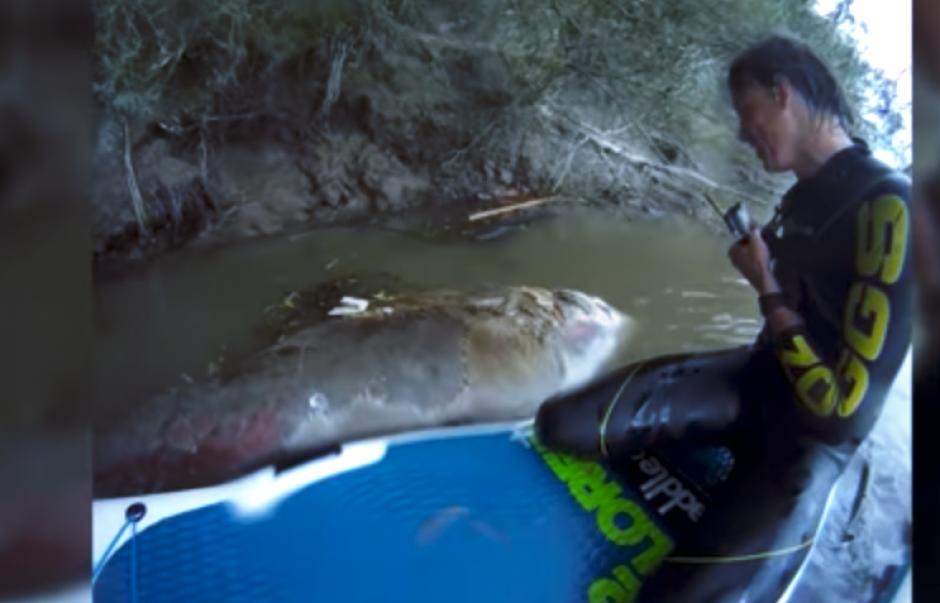 Los deportistas acuáticos se sorprendieron al encontrar al gigante animal marino. (Captura Youtube)