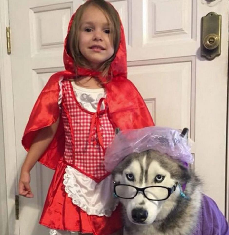 Las mascotas también pueden disfrutar de Halloween. (Foto: sopitas.com)