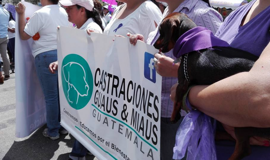 En la manifestación también participaron las mascotas que las dos jóvenes tanto amaban. (Foto: Marcia Zavala/Soy502)