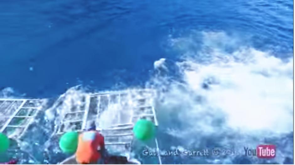 Los organizadores del recorrido turístico tratan de liberar al buceador del peligroso tiburón. (Captura Youtube)
