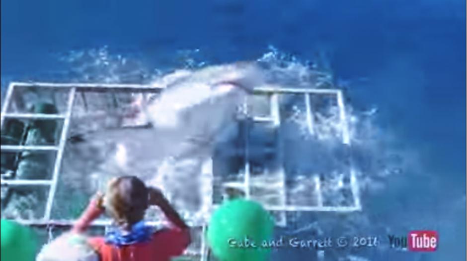 El tiburón blanco logra quebrar la jaula protectora y la angustia se apodera de las personas en la embarcación. (Captura Youtube)