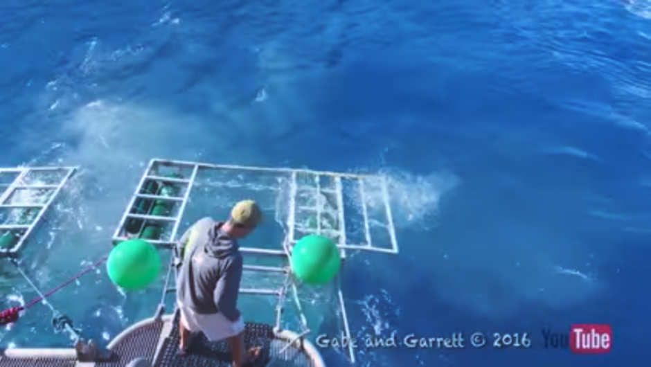 El tiburón se aleja y es el momento para tratar de sacar al turista del fondo del mar. (Captura Youtube)