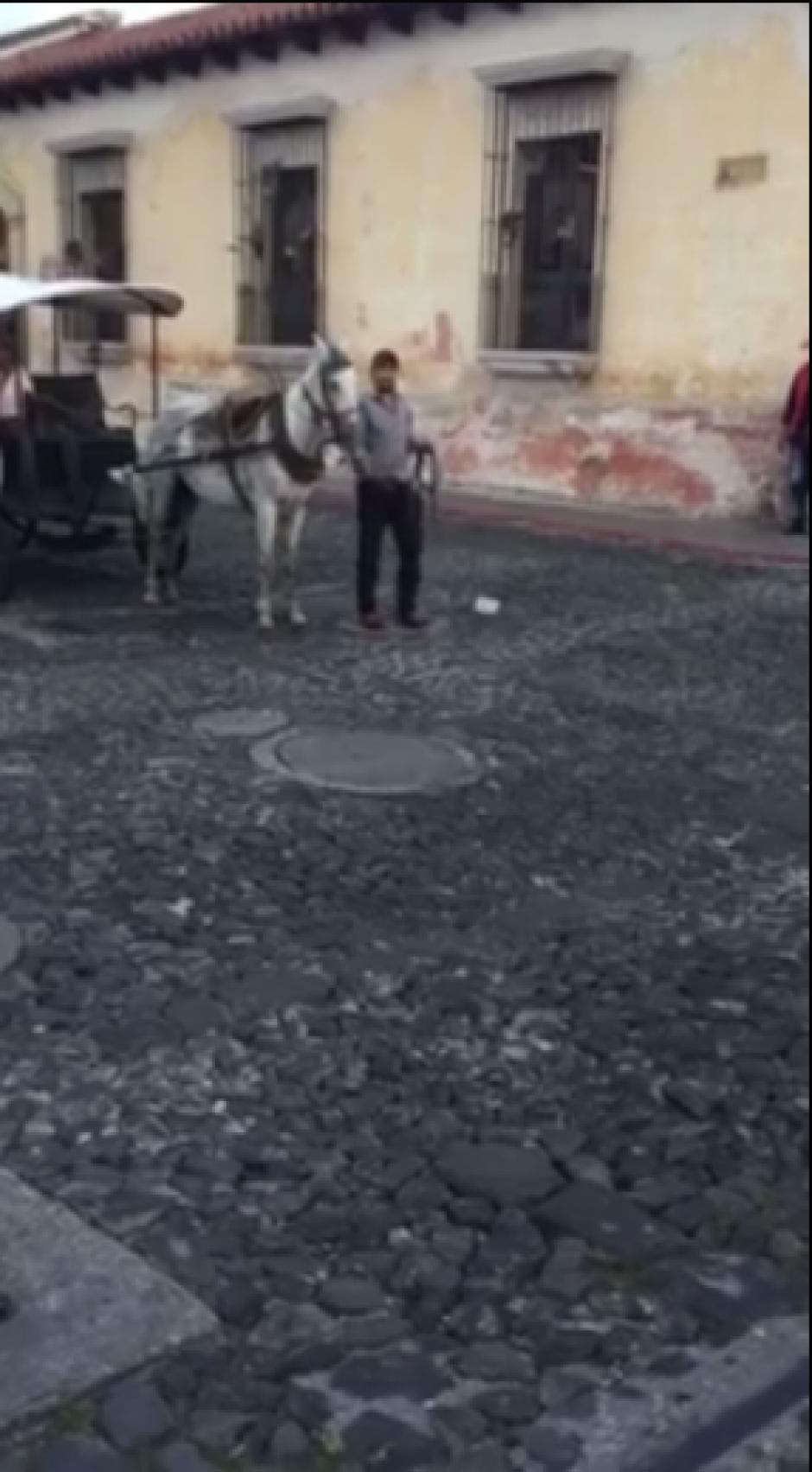 Un hombre trata de convencer a la yegua de seguir su camino, pero esta se resiste. (Captura Facebook)