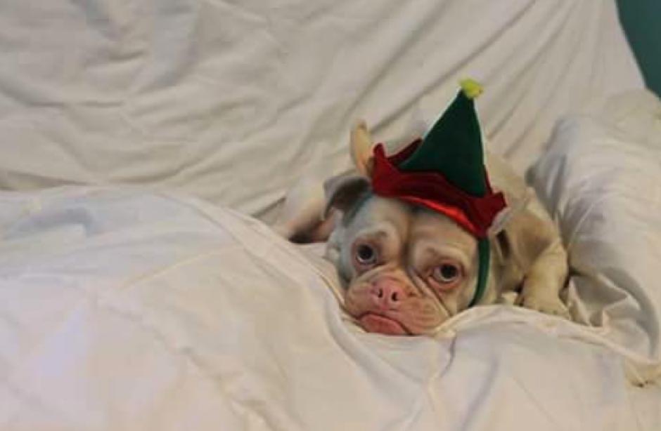 El perro tiene leucismo, una rara condición como el albinismo de la cero pigmentación. (Foto: Instagram)