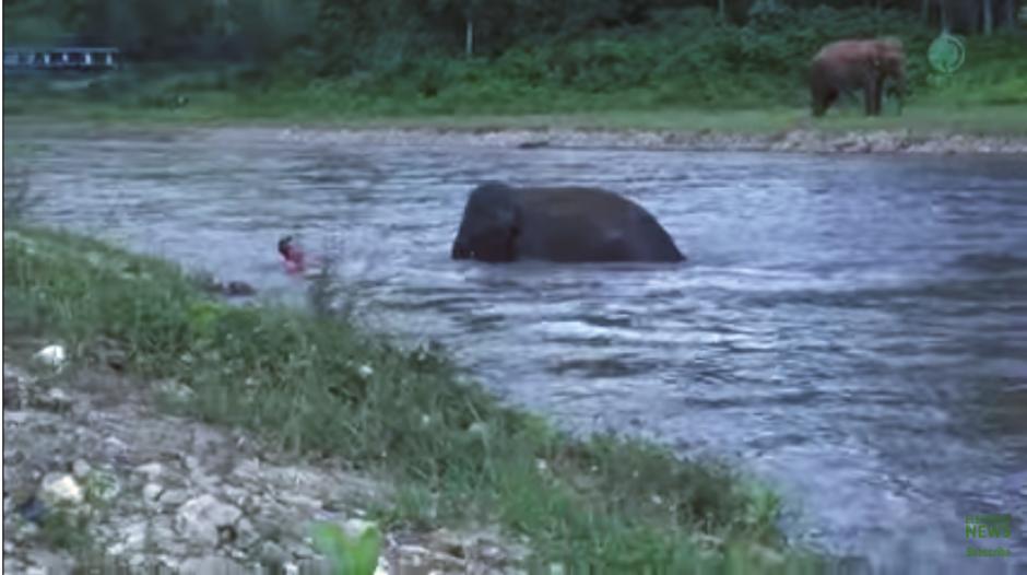 El animal va llevando poco a poco al cuidador a un lugar seguro. (Imagen: captura de YouTube)