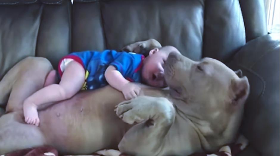 El bebé y la mascota se han robado el corazón de los internautas. (Imagen: captura de video)