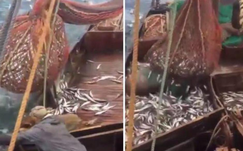 """Un león marino se """"infiltró"""" dentro de la carga de unos pescadores en Rusia"""