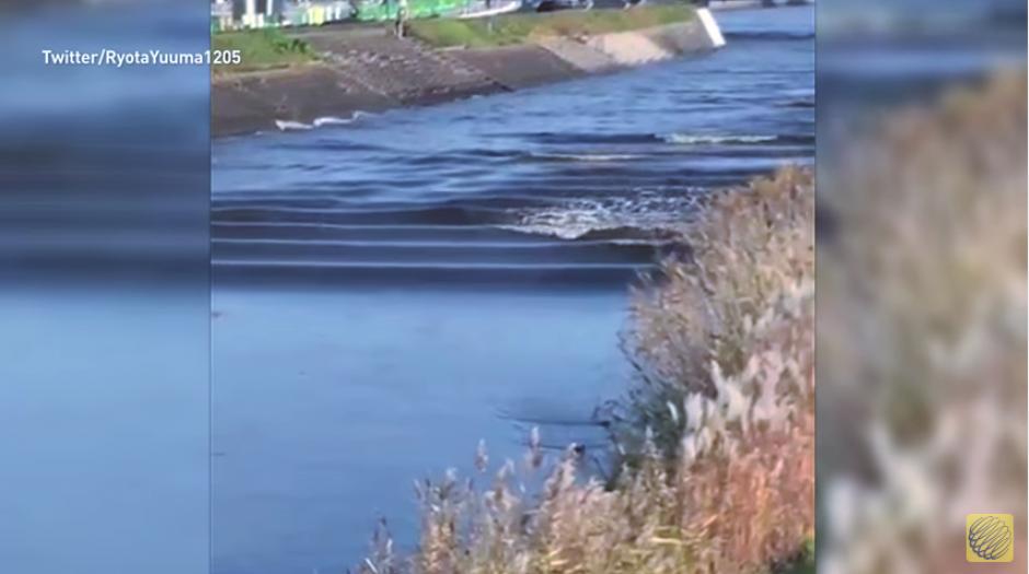 El río volvió a su caudal regular después de varios minutos. (Imagen: captura de YouTube)