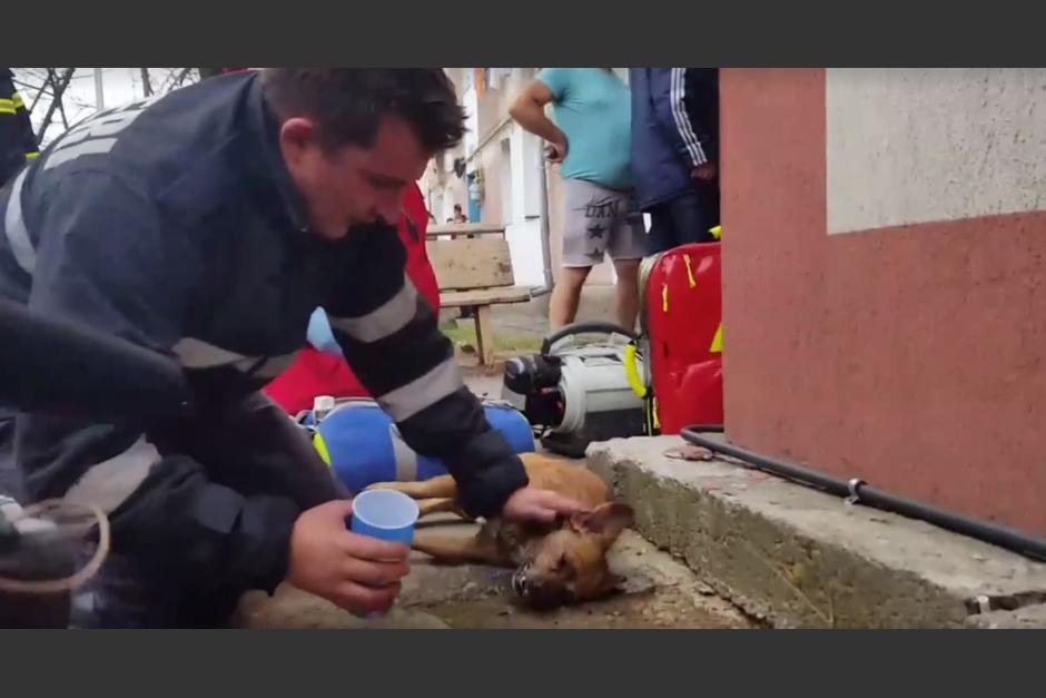 El bombero hace todo lo posible para revivir al perro. (Imagen: captura de pantalla)