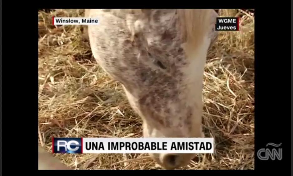 La yegua se quedó ciega desde hace unos meses. (Imagen: captura de video)