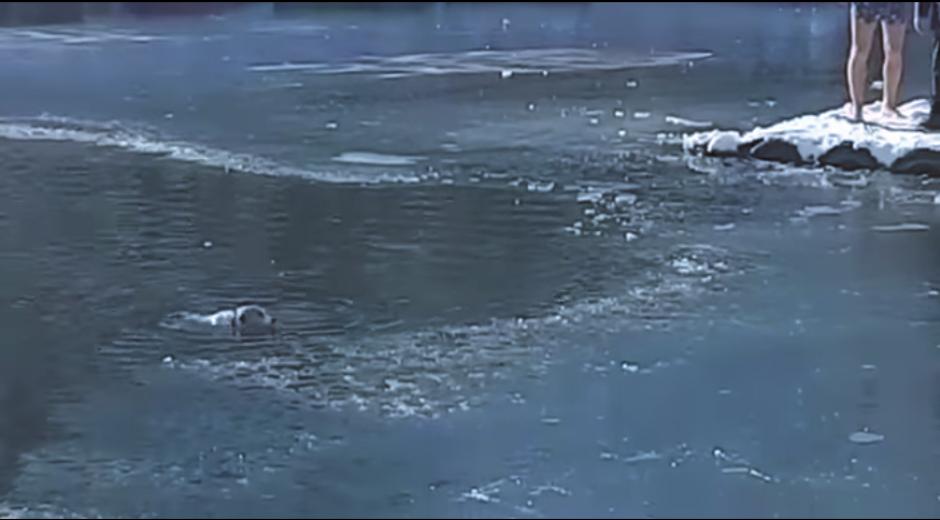 El perrito no podía salir del lago por su cuenta. (Captura Youtube)