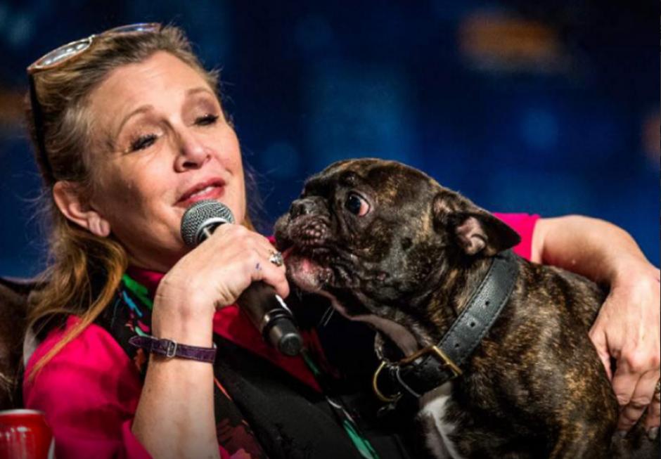 La mascota de Carrie Fisher es la que más sufre su partida. (Foto: periodicocorreo.com.mx)