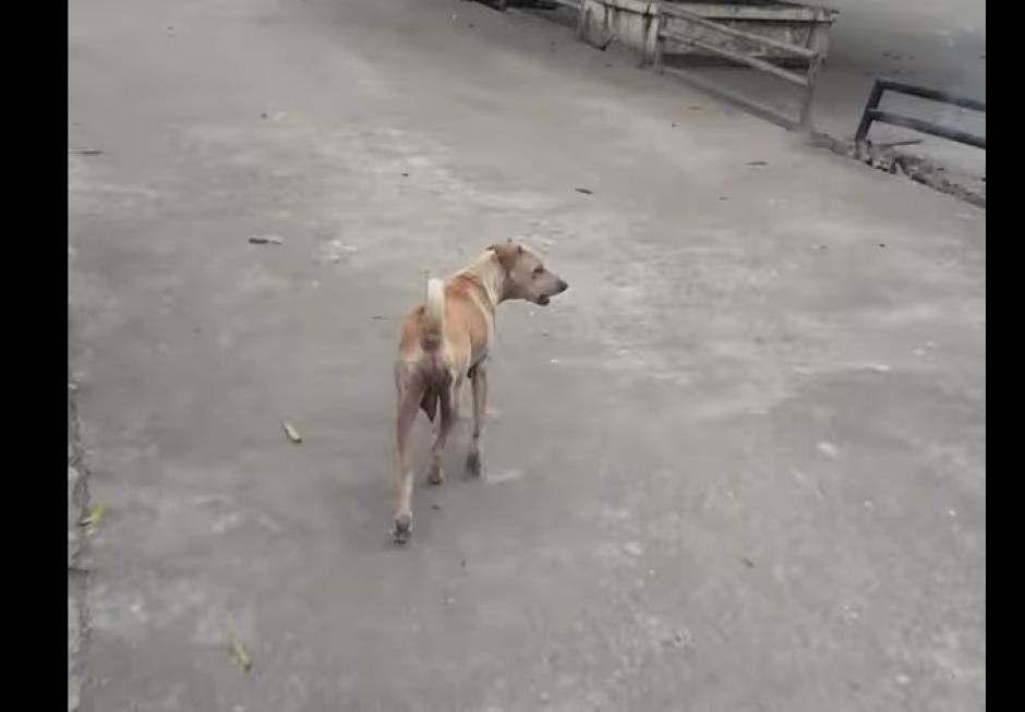 Una perra demostró lo leal y comprometida que puede ser con sus cachorros