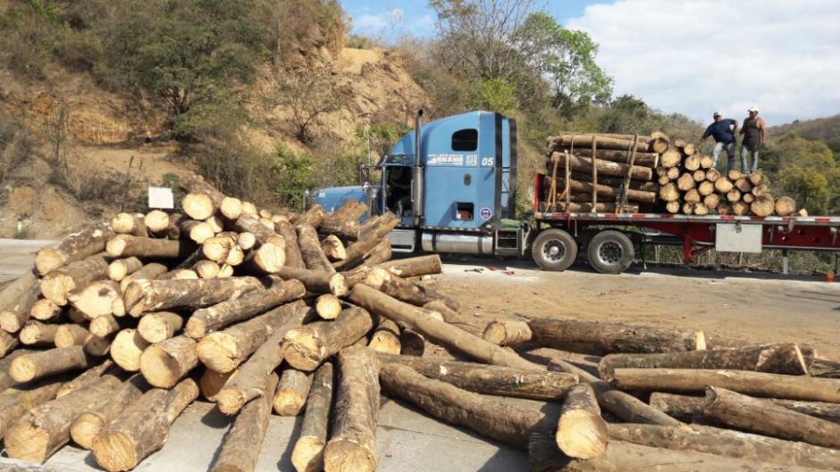 Así quedaron los troncos en la vía que conduce al Atlántico. (Foto: Provial/TránsitoPNC)