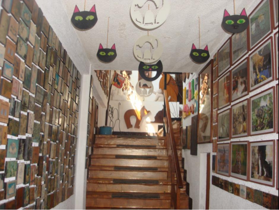 No hay sitio en el que se pueda observar a los gatitos. (Foto: Guinness World Record)